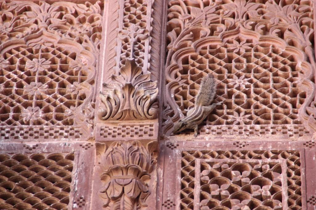 Dit eekhoorntje vind zijn weg langs de bewerkte ramen van een paleis+ wat een rakkers!